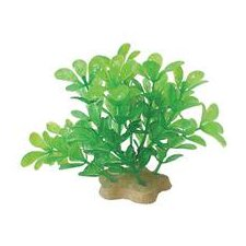 Natural Elements Bacopa Aquarium Ornament in Green