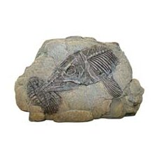 Design Elements Sea Fossil Hideaway Ornament