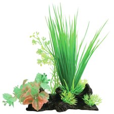 Tropical Elements Hairgrass Ludwigia Combo
