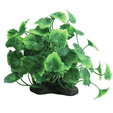 Tropical Elements Hydrocotyle