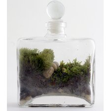 <strong>Twig Terrariums</strong> Tropisma Male Desk Top Plant in Terrarium