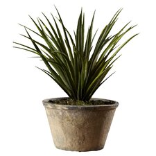 Sonoran Highlands Potted Yucca Desk Top Plant in Pot