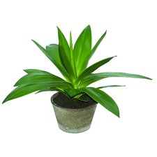 Sonoran Highlands Potted Agave Succulent Desk Top Plant in Pot