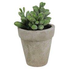 Sonoran Highlands Potted Moonstone Succulent Desk Top Plant in Pot (Set of 6)