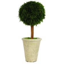 Cypress Single Ball Topiary in Pot