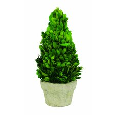 Preserved Boxwood Cone Desk Top Plant in Planter