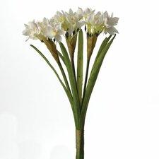 Fleur Paperwhite Bundle of 6 Stems (Set of 6)