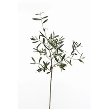 French Market Olive Branch (Set of 6)