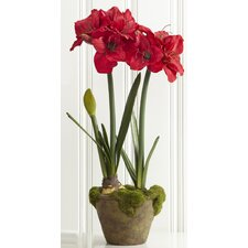 Fleur Potted Double Amaryllis with Bud