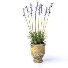 Lavender French Garden Desk Top Plant in Pot