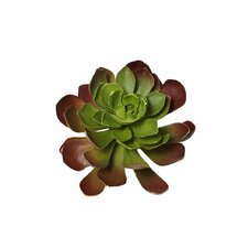 Sonoran Highlands Echeveria Succulent Desk Top Plant in Pot (Set of 12)