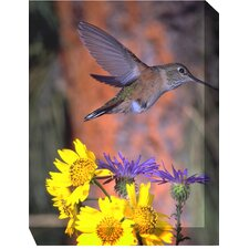Madame Hummingbird Outdoor Canvas Art