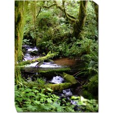 Forest Stream Photographic Print on Canvas