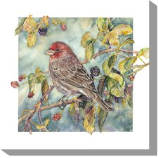 House Finch Outdoor Canvas Art