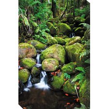 Fern Grotto Photographic Print on Canvas