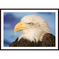Profile Of a Bald Eagle Wall Art by Don Hammond