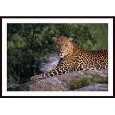 Leopard Laying On Kopje, Serengeti National Park Wall Art