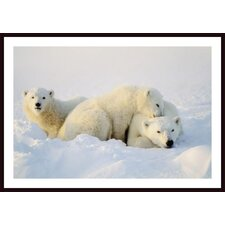 Polar Bears Wall Art by John Pitcher