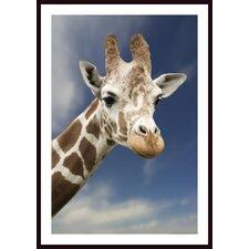 'Portrait of a Single Giraffe' by Darren Greenwood Framed Photographic Print