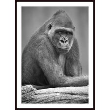 <strong>Barewalls</strong> Monkey Wall Art by Darren Greenwood