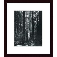 Redwoods, Founders Grove by Ansel Adams Wood Framed Art Print