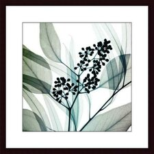 <strong>Barewalls</strong> Eucalyptus by Steven N. Meyers Wood Framed Art Print