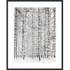 Pine Forest in The Snow, Yosemite National Park by Ansel Adams Wood Framed Art Print