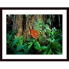 <strong>Barewalls</strong> Rain Forest Wood Framed Art Print