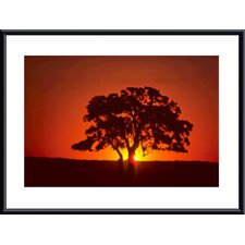 <strong>Barewalls</strong> Sunset and Oak Metal Framed Art Print