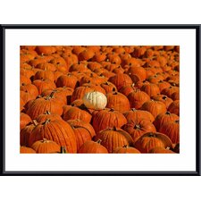 'White Pumpkin' by John K. Nakata Framed Photographic Print