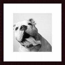 Luca by Amanda Jones Wood Framed Art Print