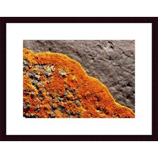 <strong>Barewalls</strong> Lichen Abstract Wood Framed Art Print