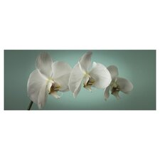 Teal Orchid Canvas Art