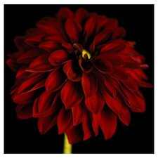 Black and Red Dahlia Canvas Art