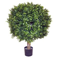Boxwood Buxus Ball Tree