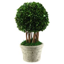 Glendale Preserved Boxwood Ball Topiary