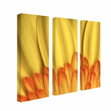 "Flame, by Aiana, Canvas Art - 24"" x 8"" (Set of 3)"