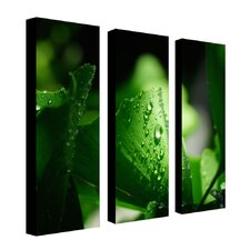 "Green Pearl by Philippe Sainte-Laudy, Canvas Art  (A 3 Piece Set) -24"" x 8"" x 2"""