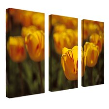 Tulips on Fire by Kurt Shaffer 3 Piece Photographic Print on Canvas Set