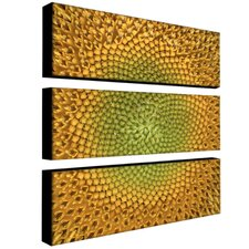 Sunflower by Aiana Canvas Art (Set of 3)