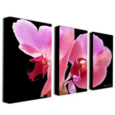 Orchid by Kathie McCurdy 3 Piece Photographic Print on Canvas Set