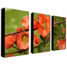 <strong>Trademark Global</strong> Quince by Kathie McCurdy Canvas Art (Set of 3)