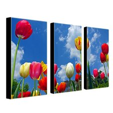Heaven by Cat Eyes Canvas Art (Set of 3)