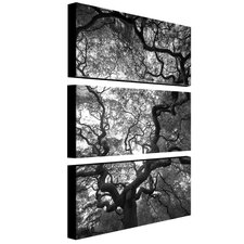 Speaking by Cat Eyes 3 Piece Photographic Print on Canvas Set