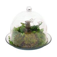 Round Terrarium Planter
