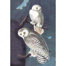 Snowy Owl by John James Audubon Graphic Art on Canvas
