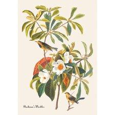 Bachman's Warbler by John James Audubon Graphic Art on Canvas