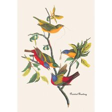 Painted Bunting by John James Audubon Graphic Art on Canvas