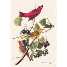 Summer Tanager by John James Audubon Graphic Art on Canvas