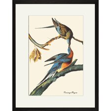 Passenger Pigeon Framed and Matted Print